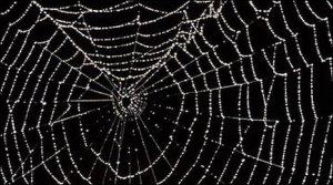 spider-web 1