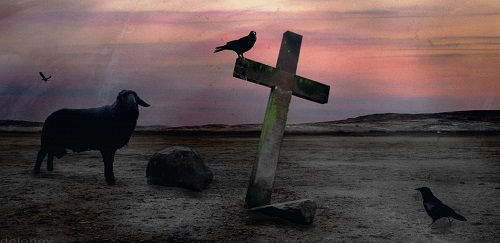 grave of the black sheep