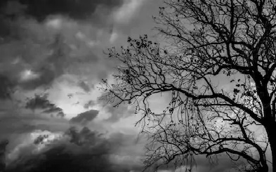 lament tree 1