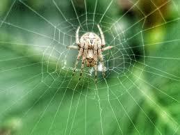 orb web spider